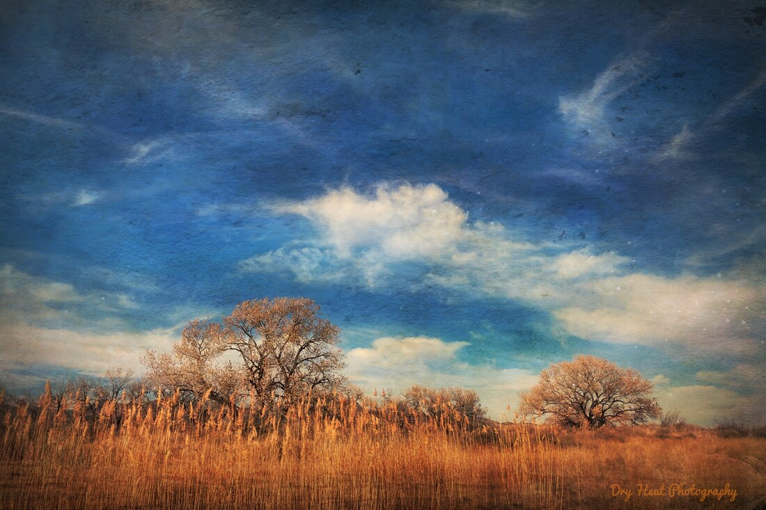 Winter Trees at Bosque del Apache Wildlife Refuge in New Mexico.