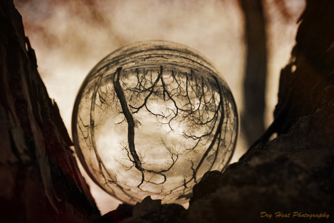 Lensball photography of Cottonwood Trees