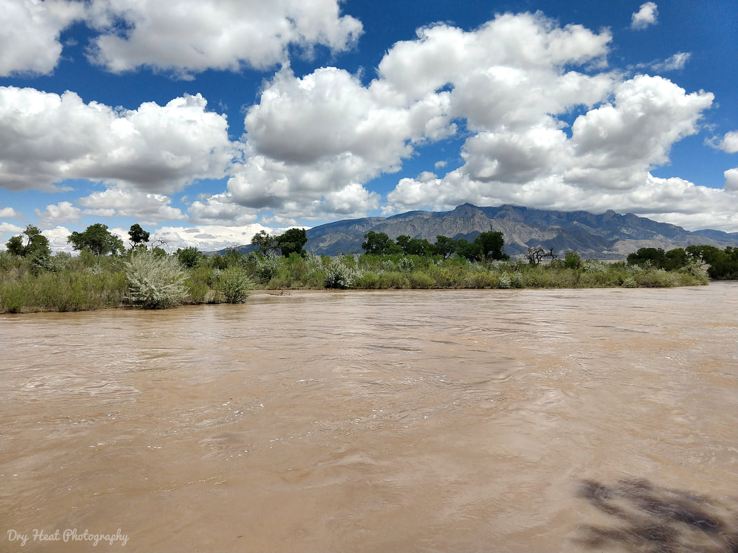 The Rio Grande River running very high in Corrales, New Mexico.