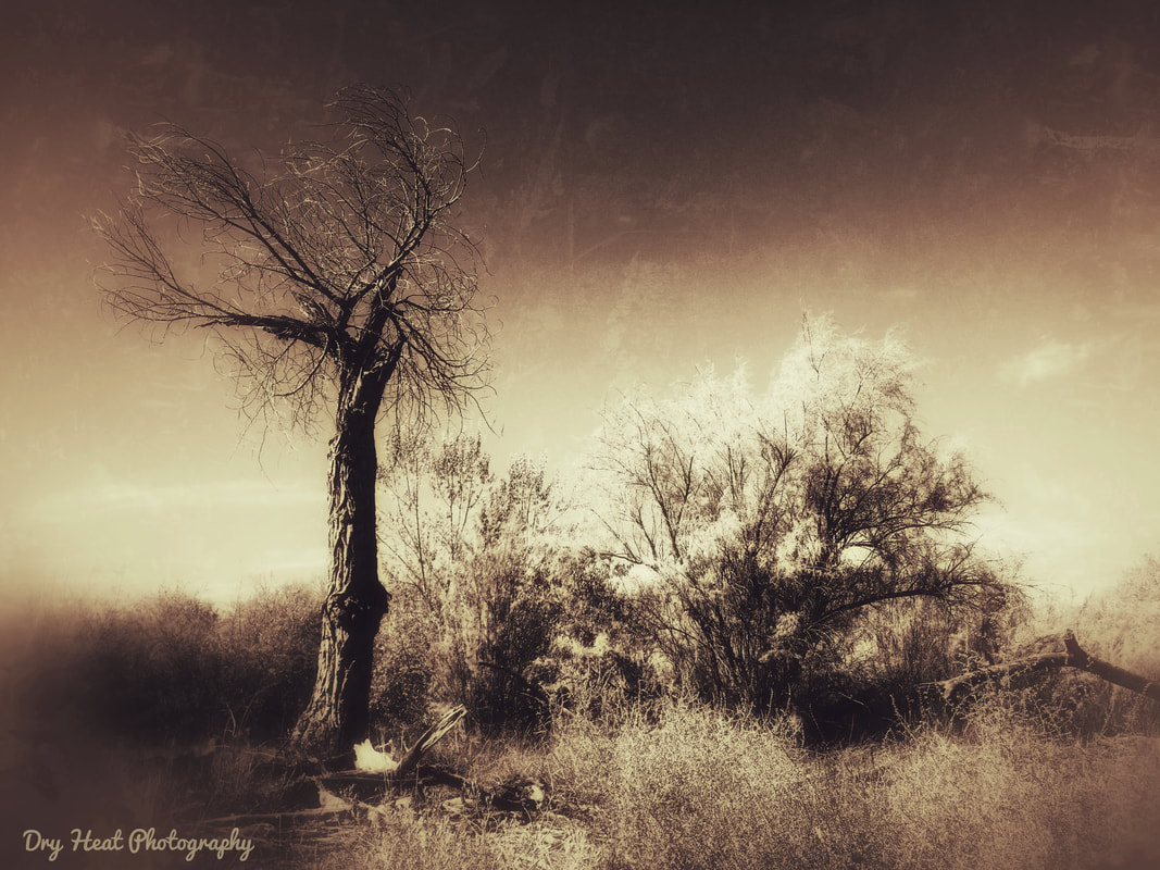 Rio Grande River Bosque in Los Lunas, new Mexico. Dry Heat Photography