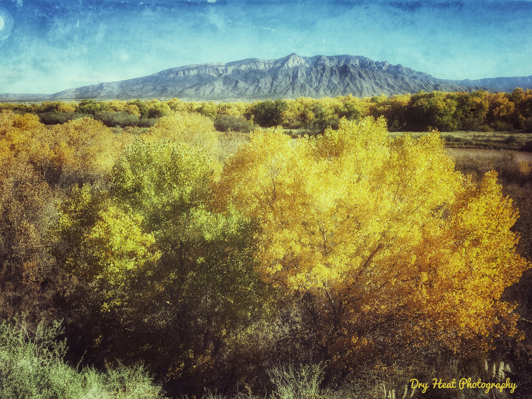 Fall Colors and Sandia Mountains as seen from The Rio Grande River Bosque in Rio Rancho, New mexico. Dry Heat Photography
