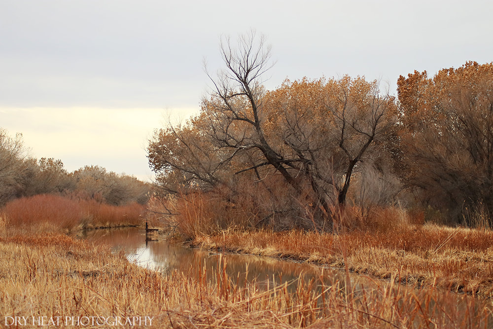 Wetlands at Bosque del Apache. Dry Heat Photography